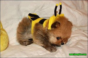 Cute-Puppy-bee-costume