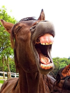 horse-178093_640
