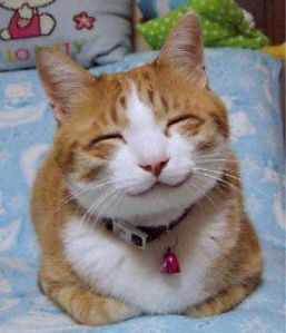 658px-So_happy_smiling_cat-2