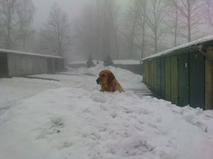 Dog_in_snow_(Barras)
