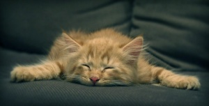 tired-kitten
